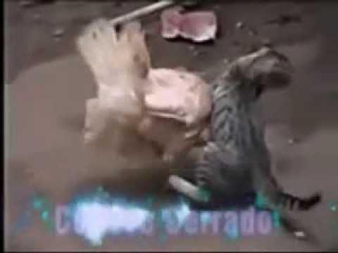 kid minino vs gallina fina - YouTube