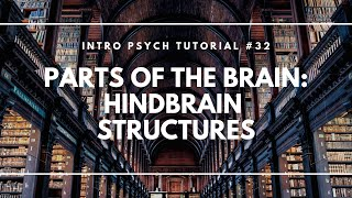 Parts of the Brain: Hindbrain Structures (Intro Psych Tutorial #32)