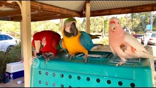 Free Flight Parrot Fun