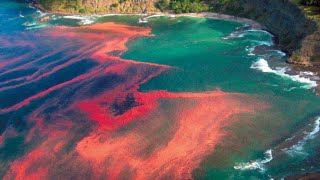 Apocalyptic! FLORIDA WATERS Turn BLOOD Red 5,400 Sq Mls; FISH Kill 8.17.14