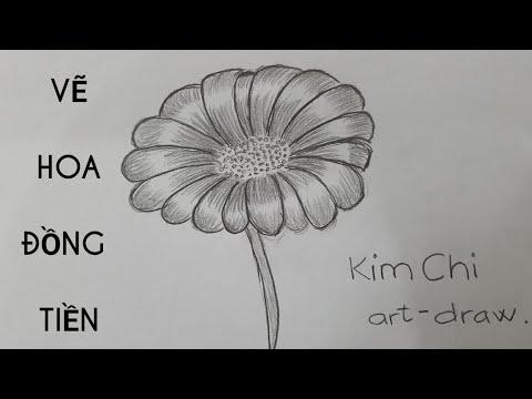 Cách Vẽ Hoa Đồng Tiền đơn giản bằng bút chì – How to Draw a Gerbera with pencil l Kim Chi Art & Draw