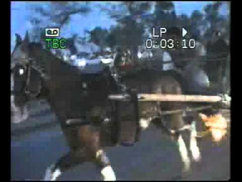 HORSE CART RACE COMONDO(1).flv