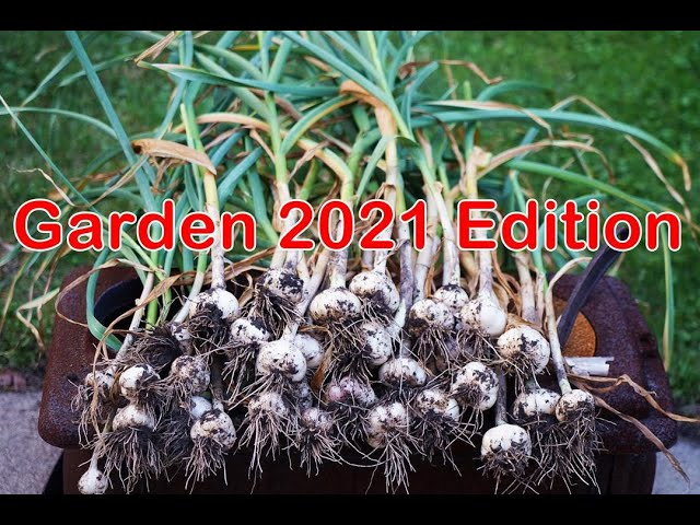 My Garden 2021 (sneak peek) | CaribbeanPot.com