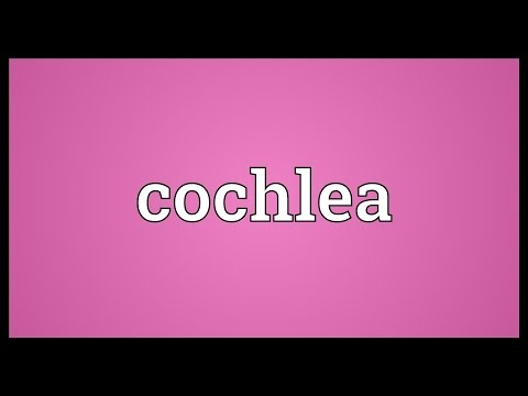 Cochlea Meaning