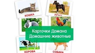 Картинки ДОМАШНИЕ ЖИВОТНЫЕ для детей, карточки Домана часть 1