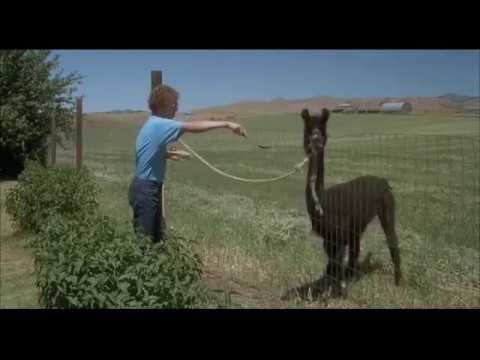 Napoleon Dynamite Tina You Fat Lard Eat The Food Youtube