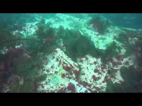 Salerno Wreck Dive  (Entire Dive) - Halifax, Nova Scotia