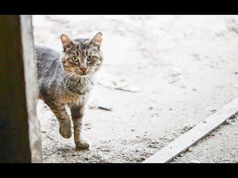 How to groom a feral cat, starring Grandpa Mason - TinyKittens.com