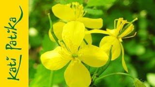 Kati-patika - Madárnevű növényeink