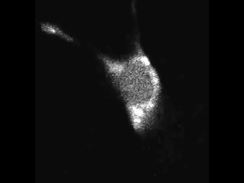 DLK-1/p38 MAP Kinase Signaling Controls Cilium Length by Regulating RAB-5 Mediated Endocytosis