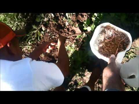 Como fazer ceva para til pias doovi for Como criar mojarras