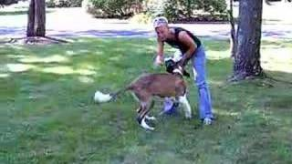 Alpha Dog Training  Video