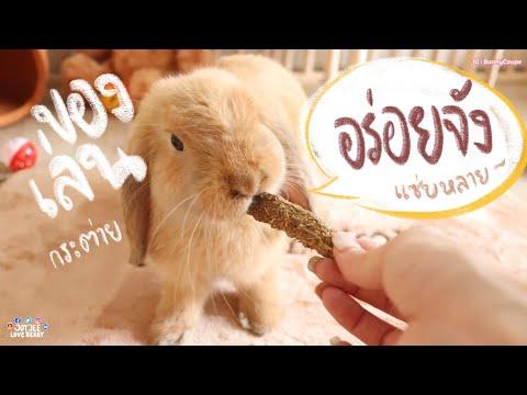 Download Ep.4 รีวิว ของเล่นกระต่าย ขนมฟันแทะ #BunnyTTCoupe | Joyjee Loveberry