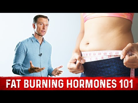 Fat Burning Hormones 101 (Weight Loss Basics)