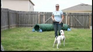 Basic Dog Training Tips : Teaching a Dog to Walk on a Leash