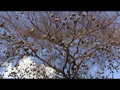 Sounds of Tsavo West National Park
