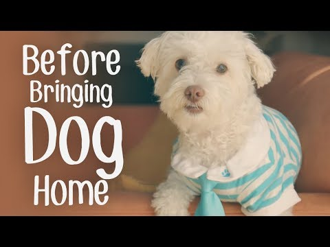 8 Things You Should Know Before Bringing a New Dog Home ** Life with Dogs **