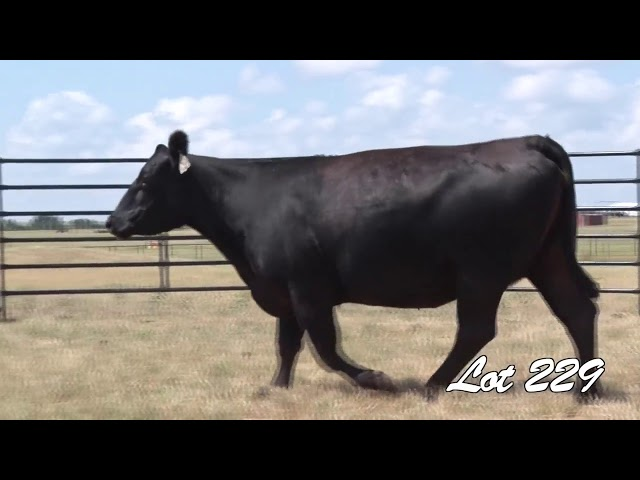 Pollard Farms Lot 229
