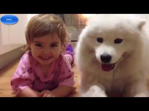 Samoyed puppy and baby # samoyed Dog showing love to Baby | Dog loves Baby Compilation #7