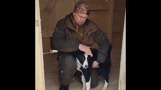 Счастливый подписчик и его щенок Байк