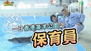《一日系列第六十三集》香港我們來了!邰邰保育員帶著廣東木曜粉前進海洋公園囉~-一日香港海洋公園保育員 thumbnail
