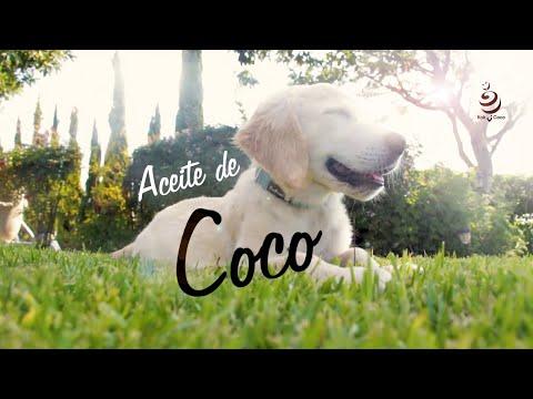 Conoce TODOS los Beneficios del Aceite de COCO para tu Mascota!