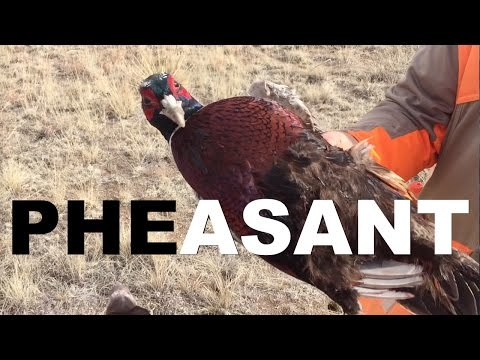 Pheasant Hunting - Colorado (Rocky Mountain Roosters)