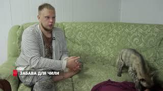 Гиена живет с дикой кошкой во Владивостоке