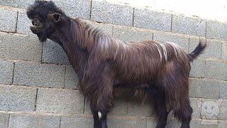 10 очень странных и забавных животных | 10 very strange and funny animals (Животные №3)