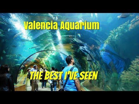 Valencia Aquarium.  The best Aquarium I have ever seen.  Ep102