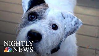The Evolution Of 'Puppy Dog Eyes' | NBC Nightly News