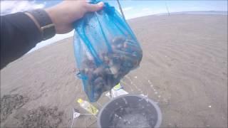 潮干狩りに行ってきた。 マテ貝用の塩が1時間ほどで無くなって終了…。 ...