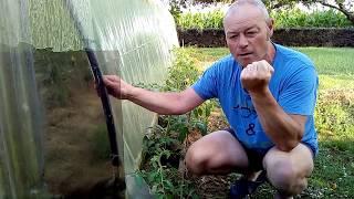 Multiplier Vos Pieds De Tomates à Volonté