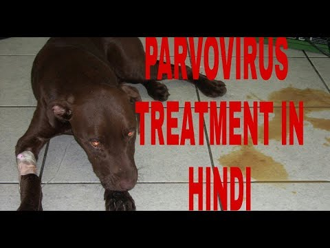 How To Make Parvovirus Treatment At Home Dog Ultimate Care Youtube