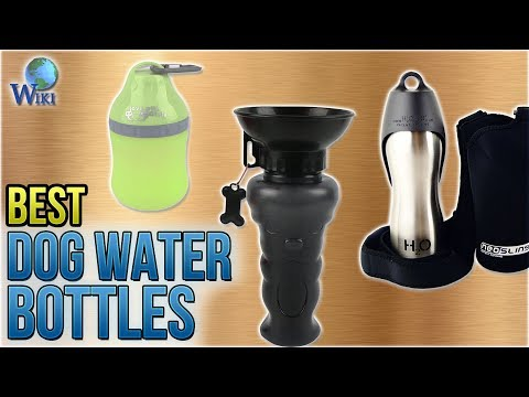 10 Best Dog Water Bottles 2018