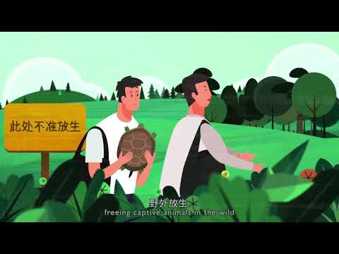 Learning about China's Wildlife Protection Law - Short