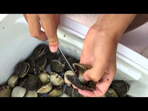 How to clean bay scallops
