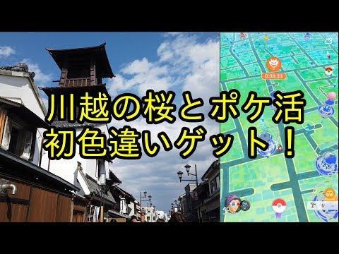 【ポケモンGO】川越の桜を見ながらポケ活(主にゴープラ)