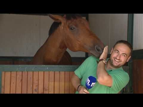 Horse loves TV reporter