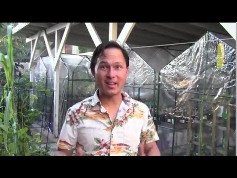Growing Fall/Winter Crops in $17.50 Greenhouses To Have Fresh Food Over the Winter