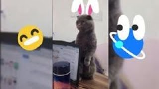 FUNNY ANİMALS CUTE ANİMALS TRY NOT TO LAUGH VİDEOS CUTEST MOMENT 2020 AUGUST SOO CUTE #12