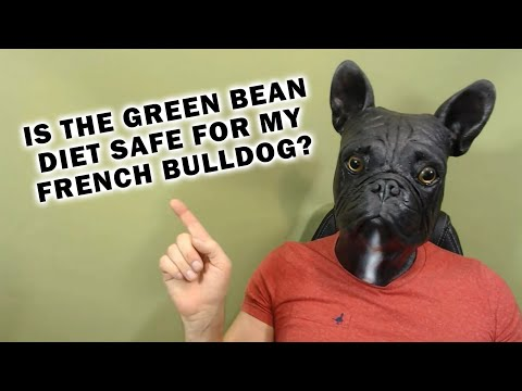 Is It Safe To Put My French Bulldog on the Green Bean Diet 1