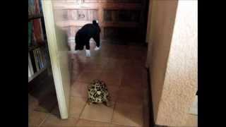 カメンコはたぶん普通に歩いてるだけw ワンコは初めてカメンコを生き物...