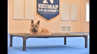 Lacie (Cairn Terrier) Boot Camp Dog Training Video Demonstration