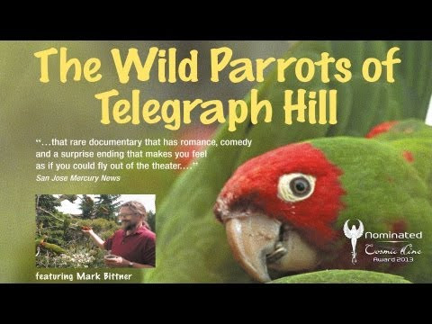 THE WILD PARROTS OF TELEGRAPH HILL - Trailer Deutsch - Nominiert Cosmic Angel 2013