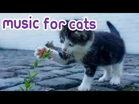 Cat Music: My Cat Wont Sleep, Music to Calm Cats!