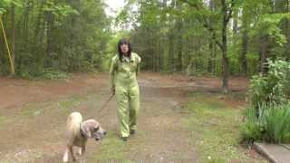 Dog Training: Walking With A Great Dane Puppy And Recall