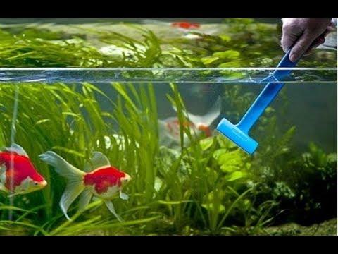 Как ухаживать за маленьким аквариумом без фильтра