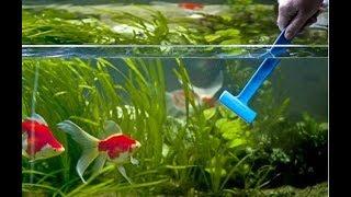 Как ухаживать за маленьким аквариумом. Пошаговая инструкция