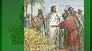 Kap za dobar dan, 21. 7. XV. PETAK (Mt 12,1-8)